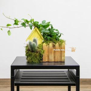 Miniature wooden house with cacti and ivy