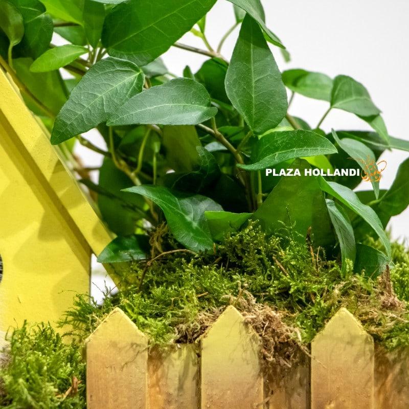 ivy and moss indoor plants