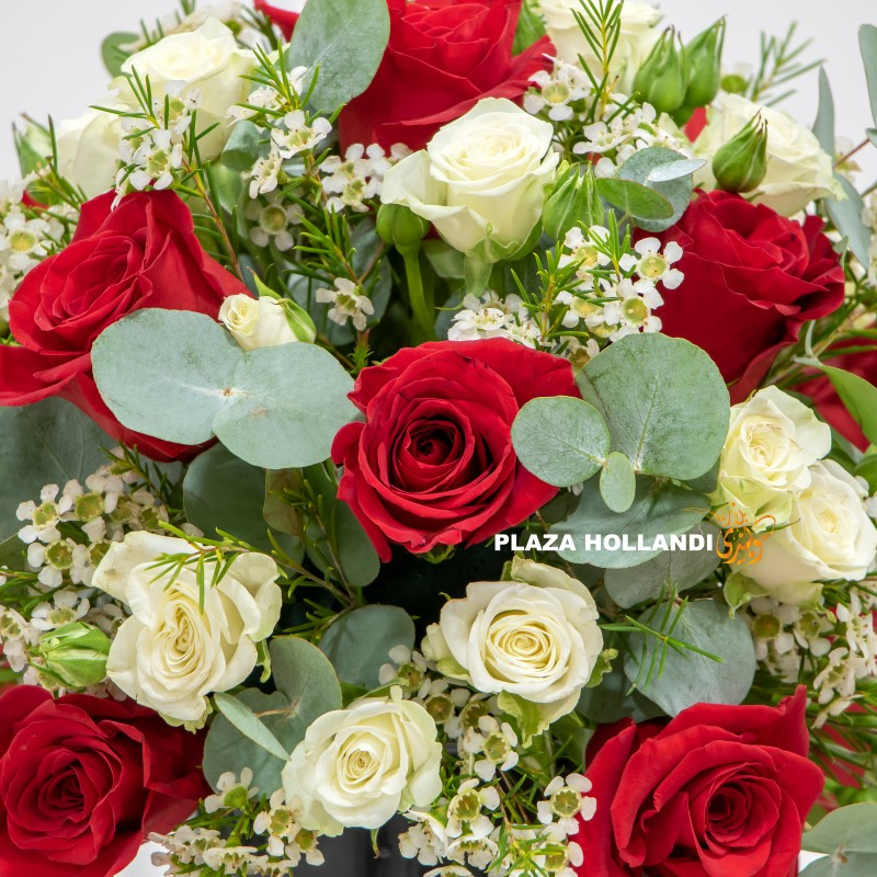 red and white roses close up