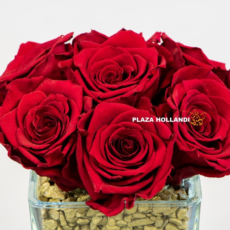 long lasting red roses