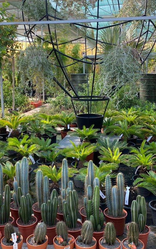 Plaza Hollandi Garden centre with cactus and cycas